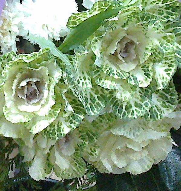 Foto 15 de Floristerías en  | Flores Maranta
