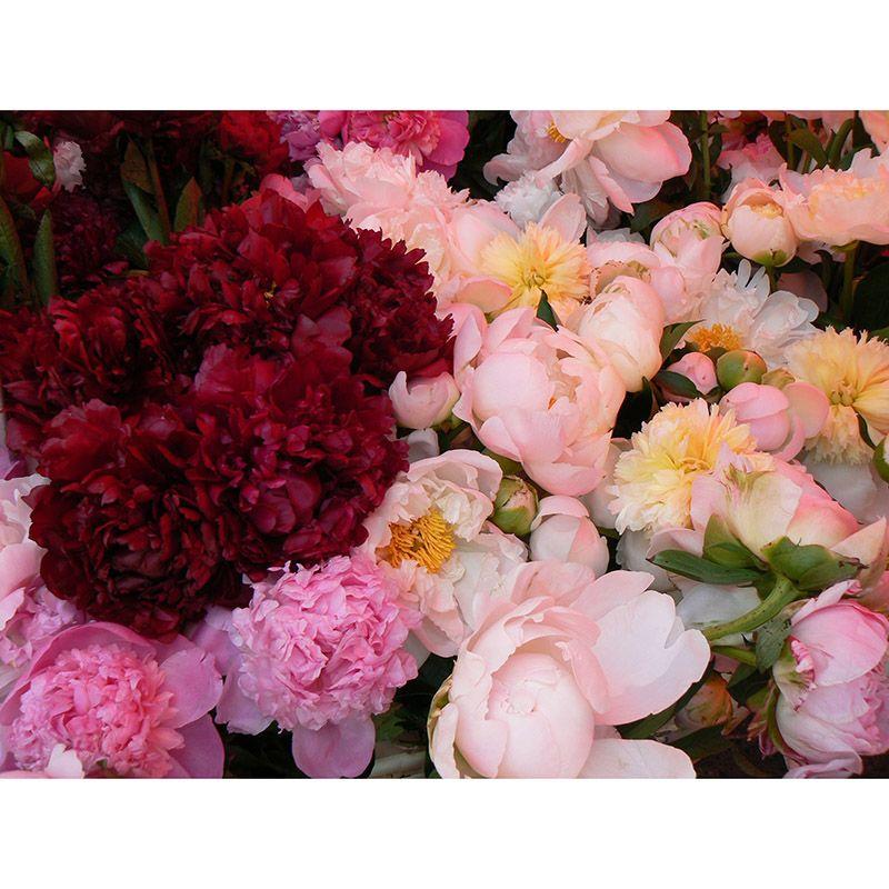 Foto 0 de Floristerías en  | Flores Maranta