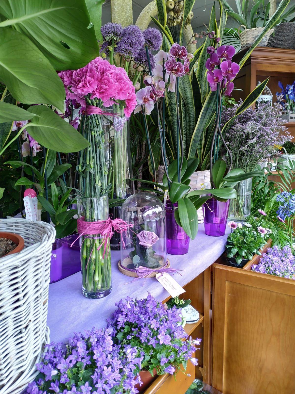 Foto 14 de Floristerías en    Flores Maranta