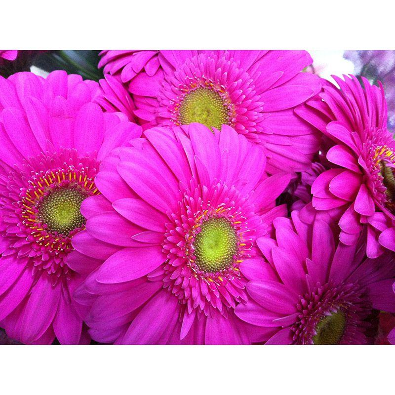 Foto 34 de Floristerías en  | Flores Maranta