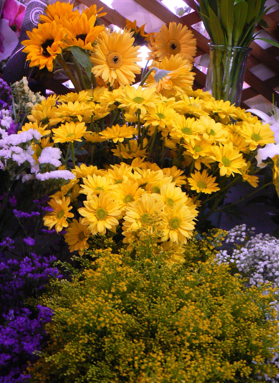 Foto 29 de Floristerías en  | Flores Maranta