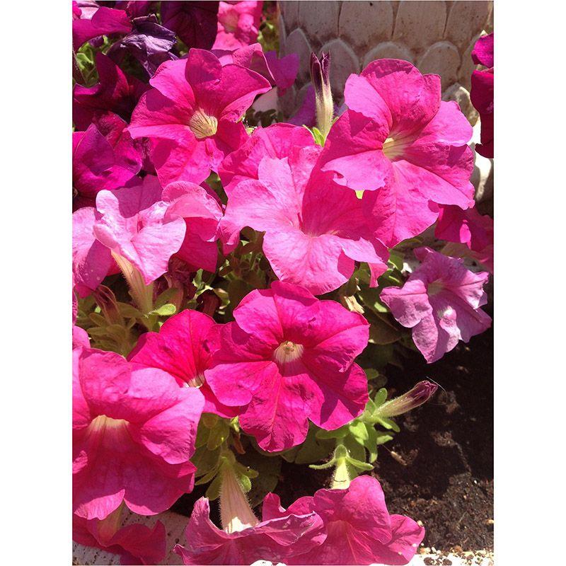 Foto 69 de Floristerías en  | Flores Maranta