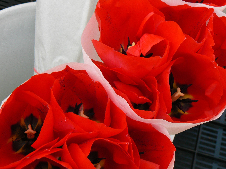 Foto 31 de Floristerías en  | Flores Maranta