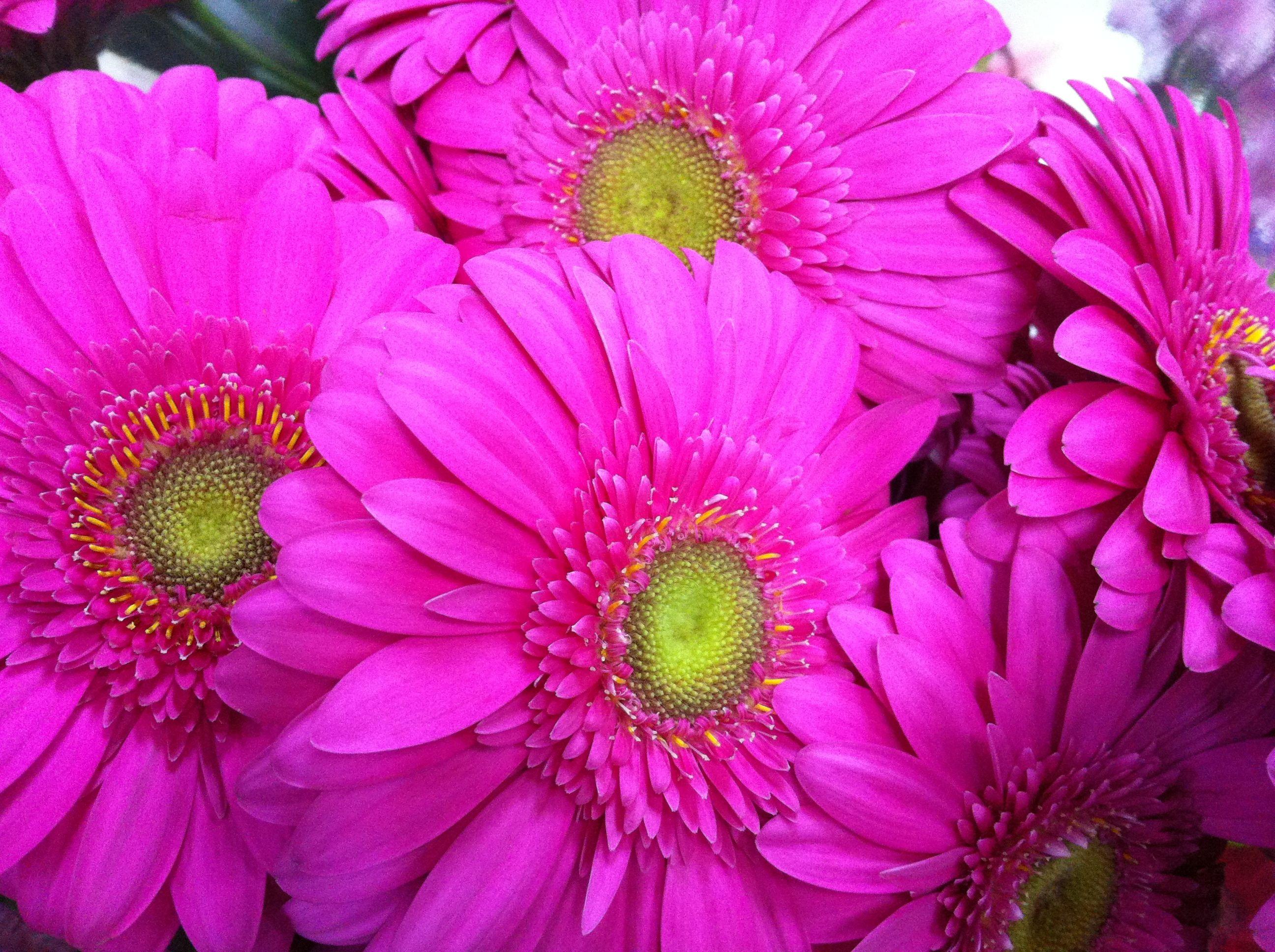 Foto 41 de Floristerías en  | Flores Maranta
