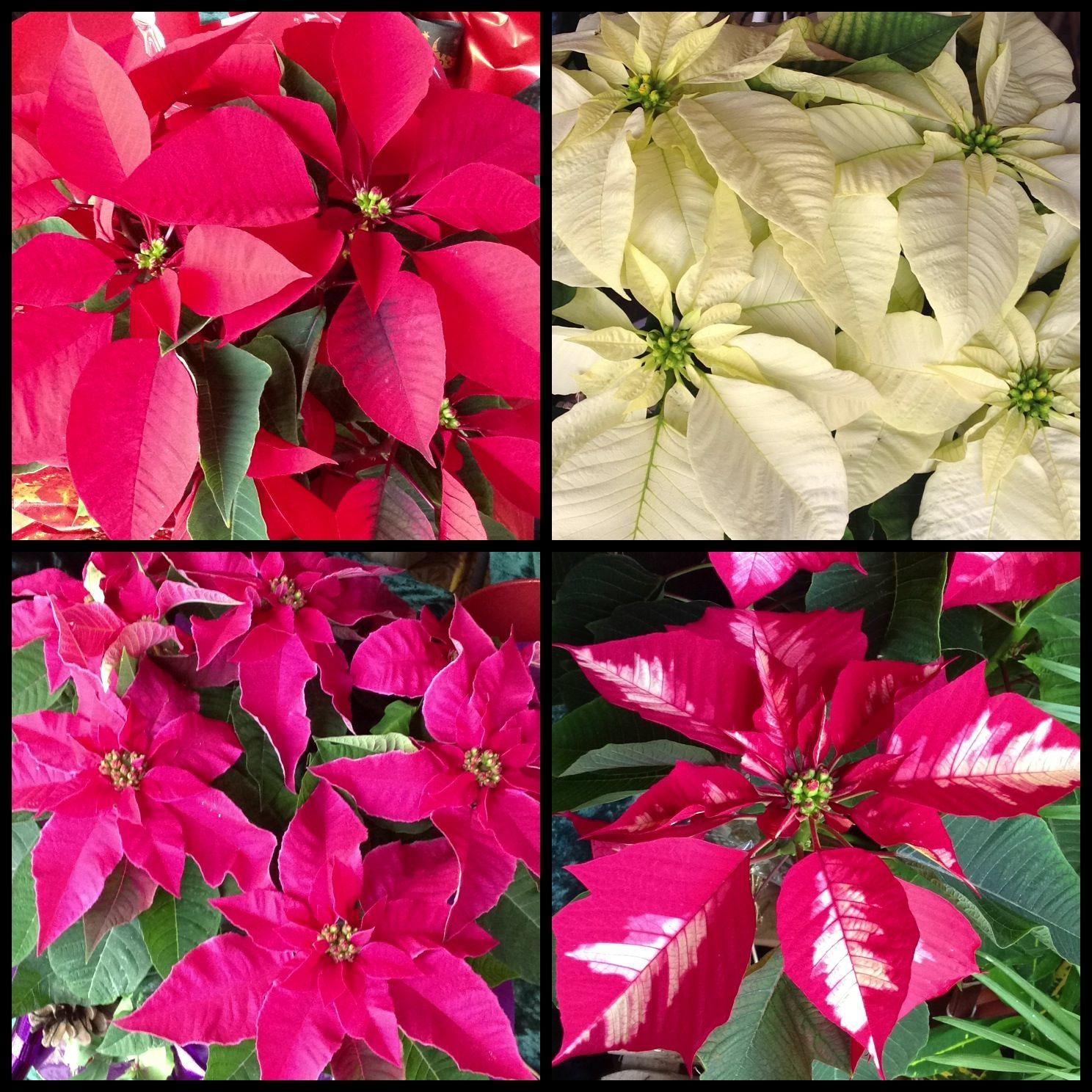 Foto 33 de Floristerías en  | Flores Maranta