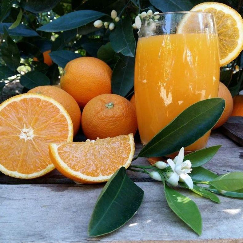 Naranjas a domicilio Cantabria