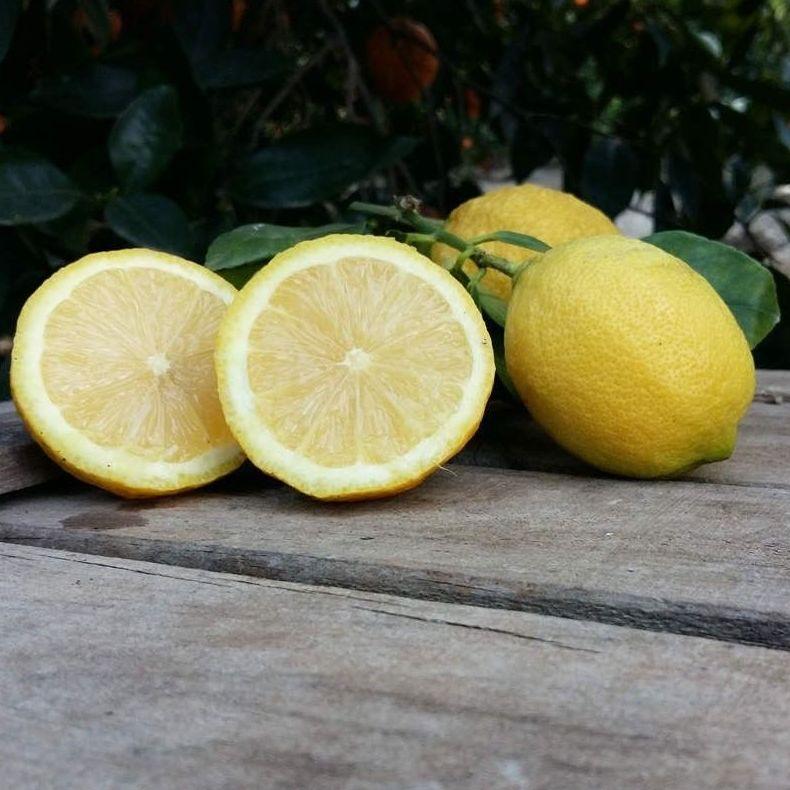 Venta online de limones y mandarinas