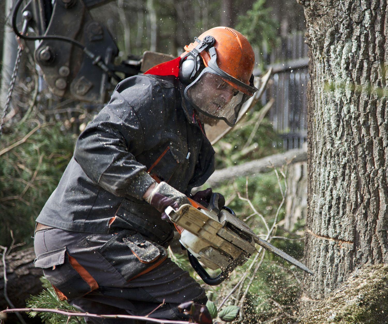 Corte y arrastre de árboles en La Seu D'urgell