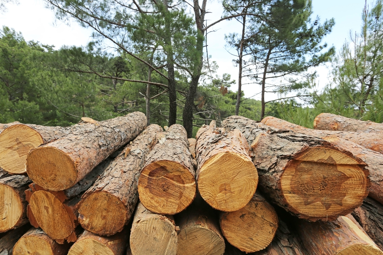 Arrastre de árboles: Servicios de Josep Balletbo Trabajos Forestales