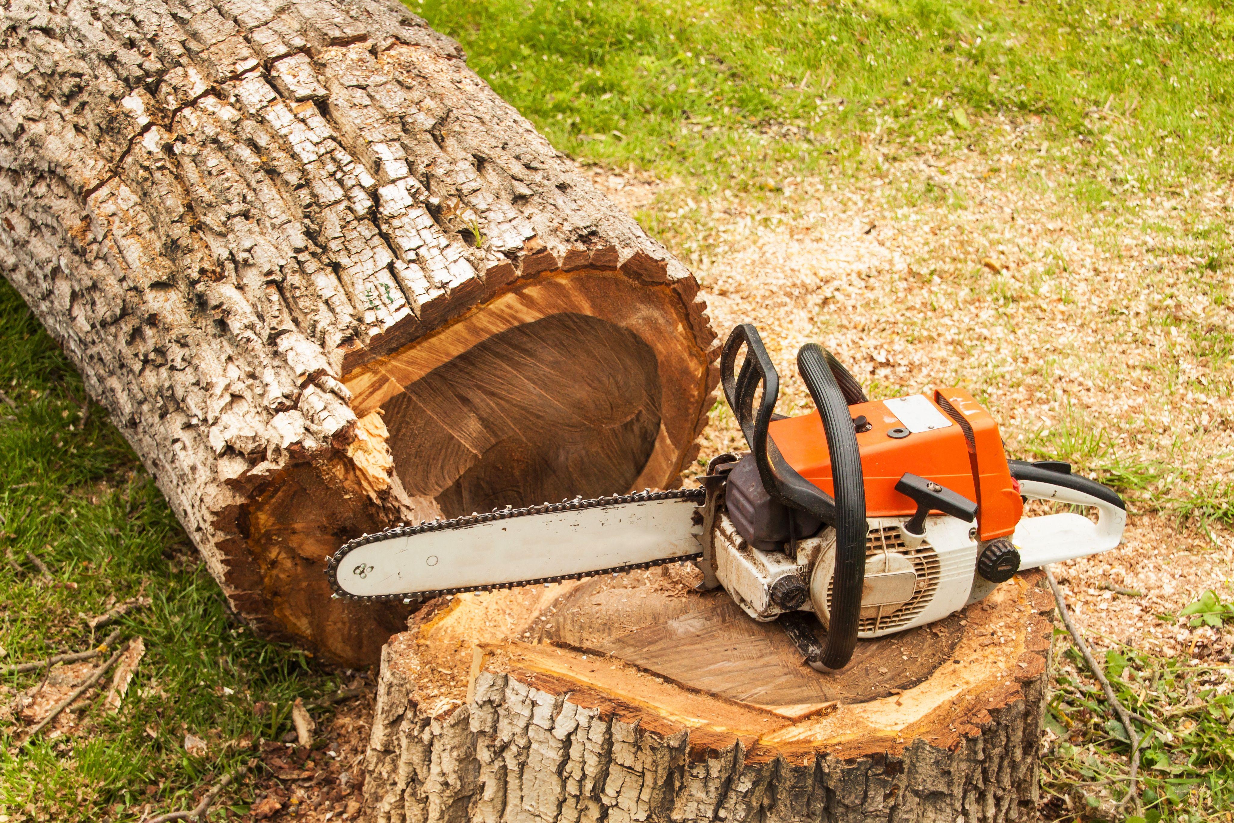 Corte de árboles en La Seu D'urgell