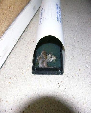 Eliminacion de roedores