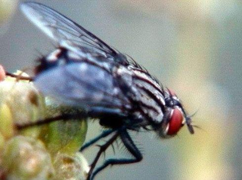 Eliminación de moscas