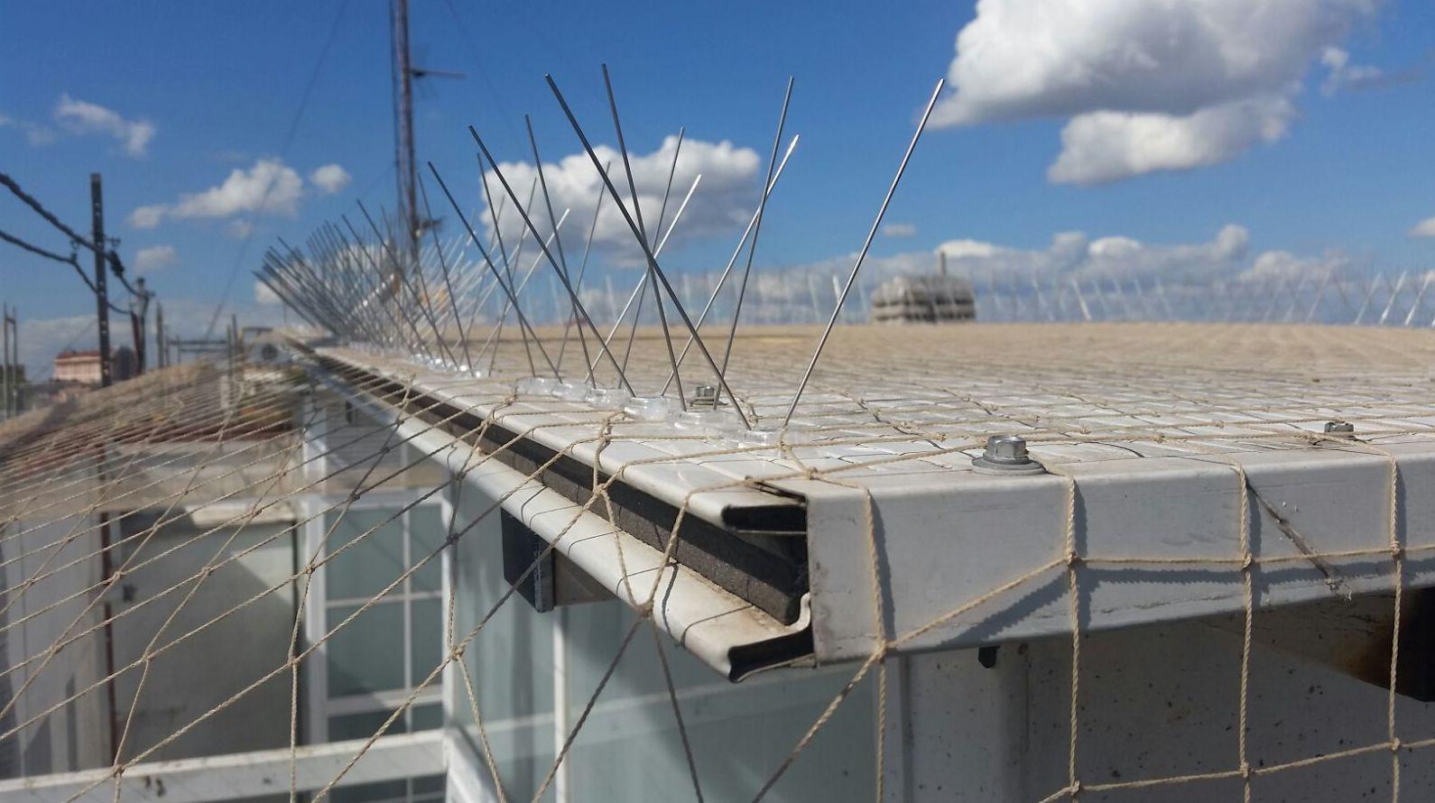 Tratamiento de Palomas, instalación de redes