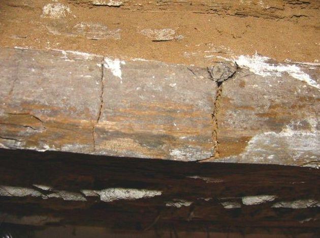 Eliminación de termitas