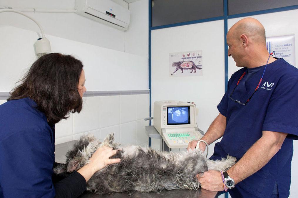 Ecografía: Especialidades de Hospital Veterinario Desvern