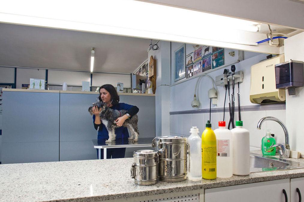 Foto 7 de Veterinarios en Sant Just Desvern | Hospital Veterinario Desvern