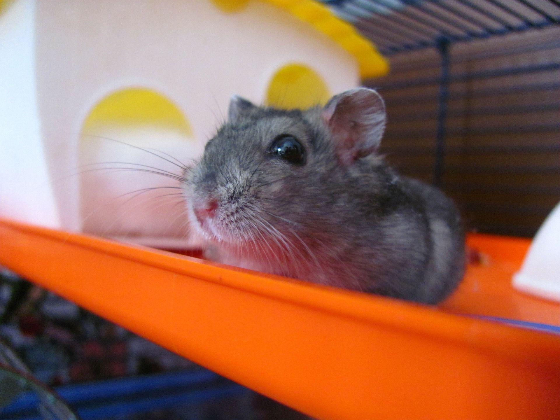 Accesorios para roedores: Servicios de Animals Land