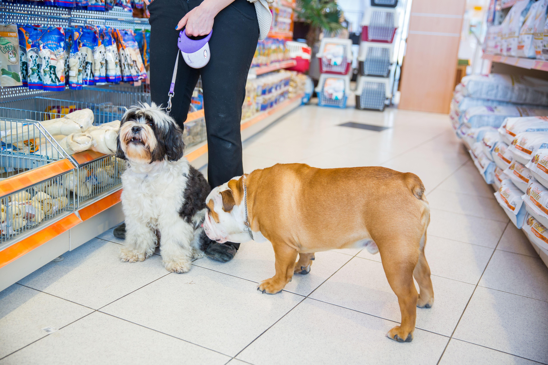 Consultorio veterinario: Servicios de Animals Land