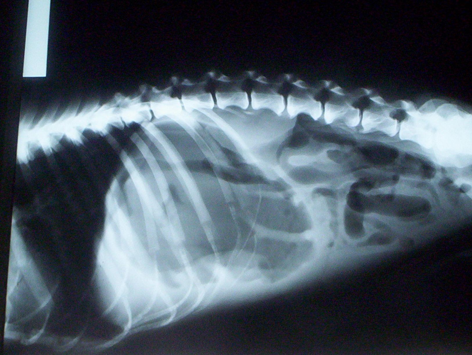 Imagen de una radiografía