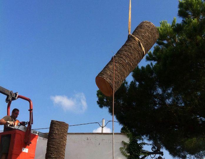 Variedad de servicios como la poda de árboles