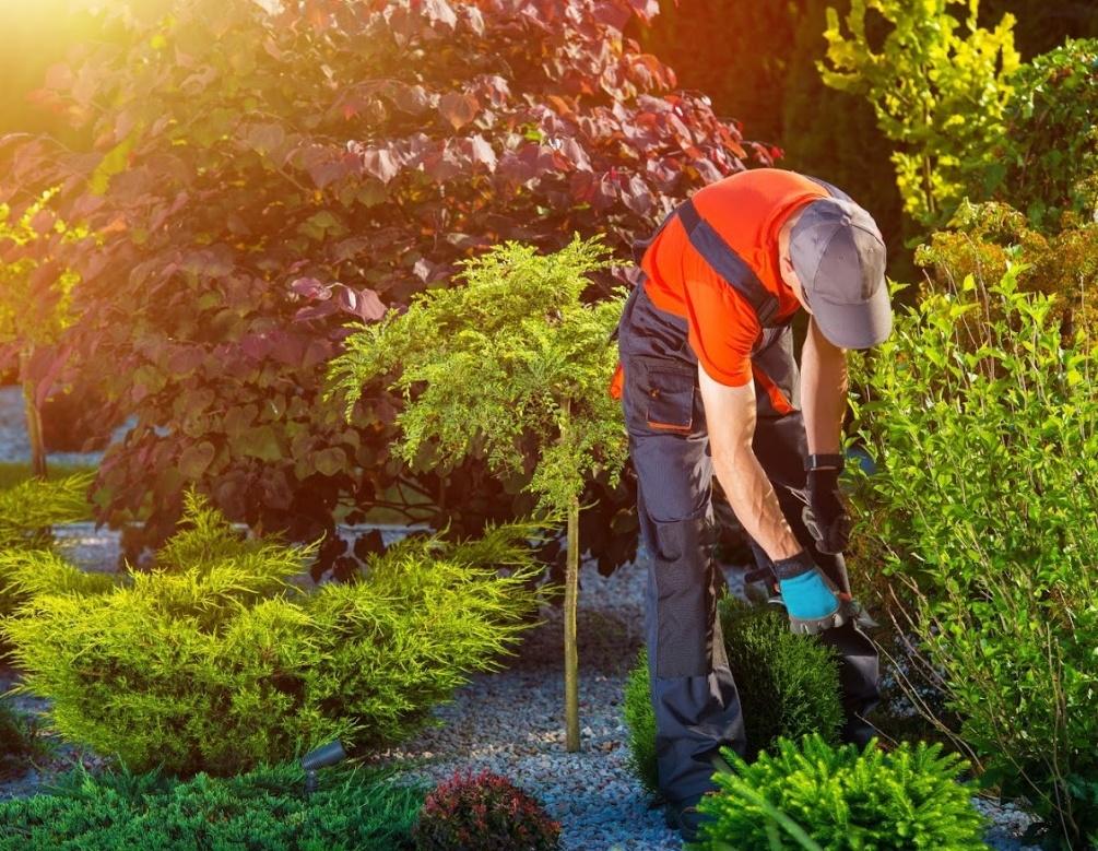 Jardinería y limpiezas en general: Servicios de Troyano Servicios Generales