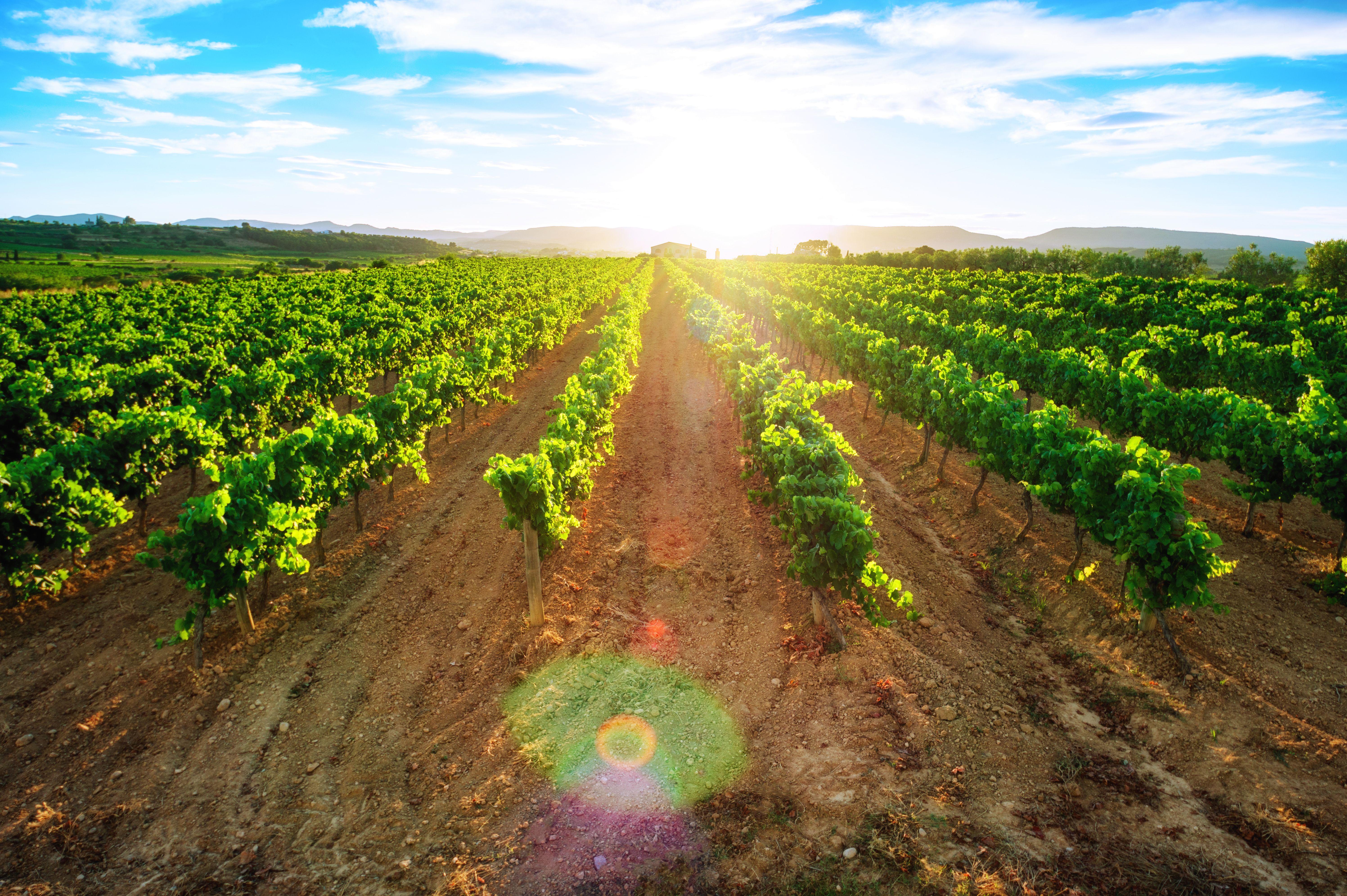 Producto para mejorar la aireación de suelos compactos