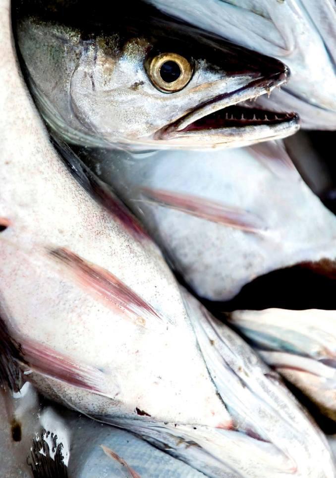 Foto 4 de Pescaderías en Basauri | Servicio Horeca