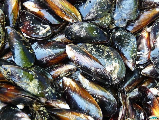 Foto 6 de Pescaderías en Basauri | Servicio Horeca