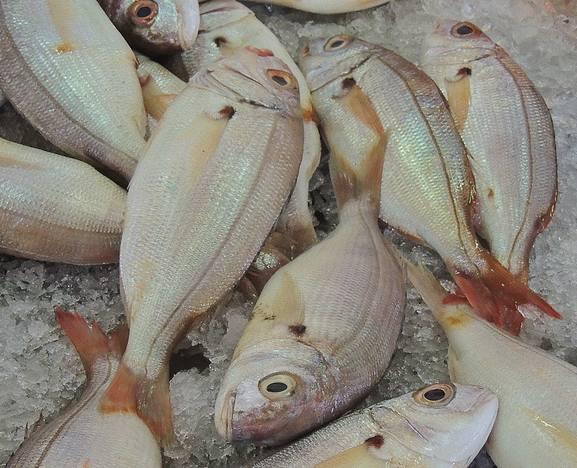 Foto 12 de Pescaderías en Basauri | Servicio Horeca