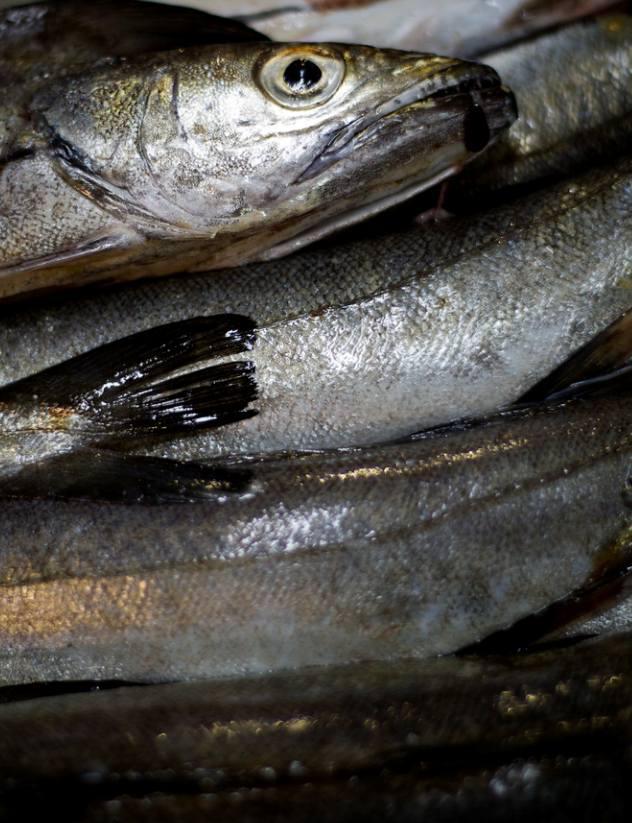 Foto 18 de Pescaderías en Basauri | Servicio Horeca