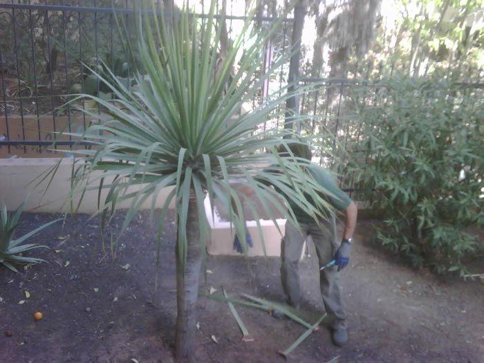Molowny Servicios Integrales \u002D Mantenimiento de jardines