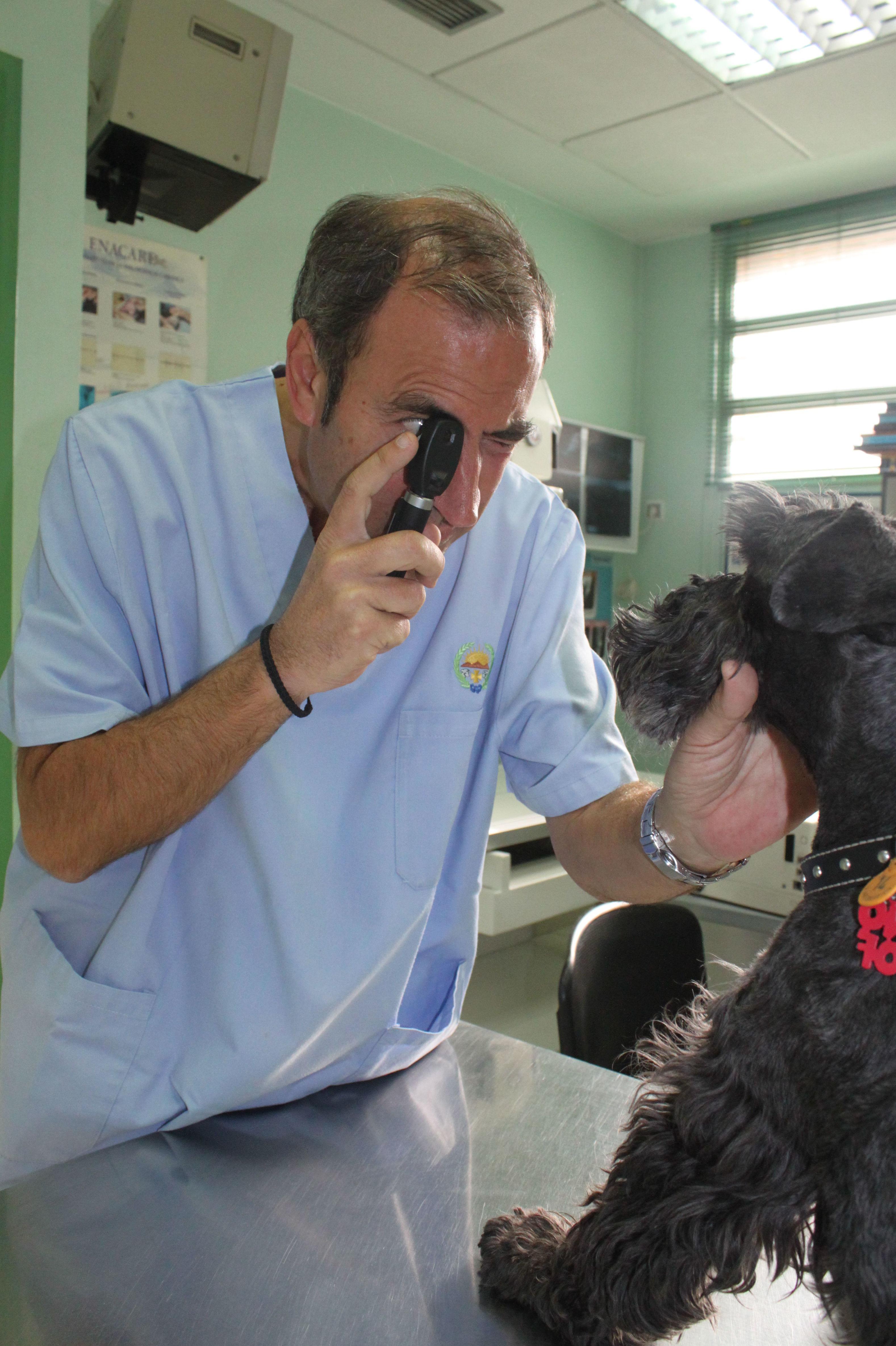 Foto 28 de Veterinarios en  | Argos Clínica Veterinaria