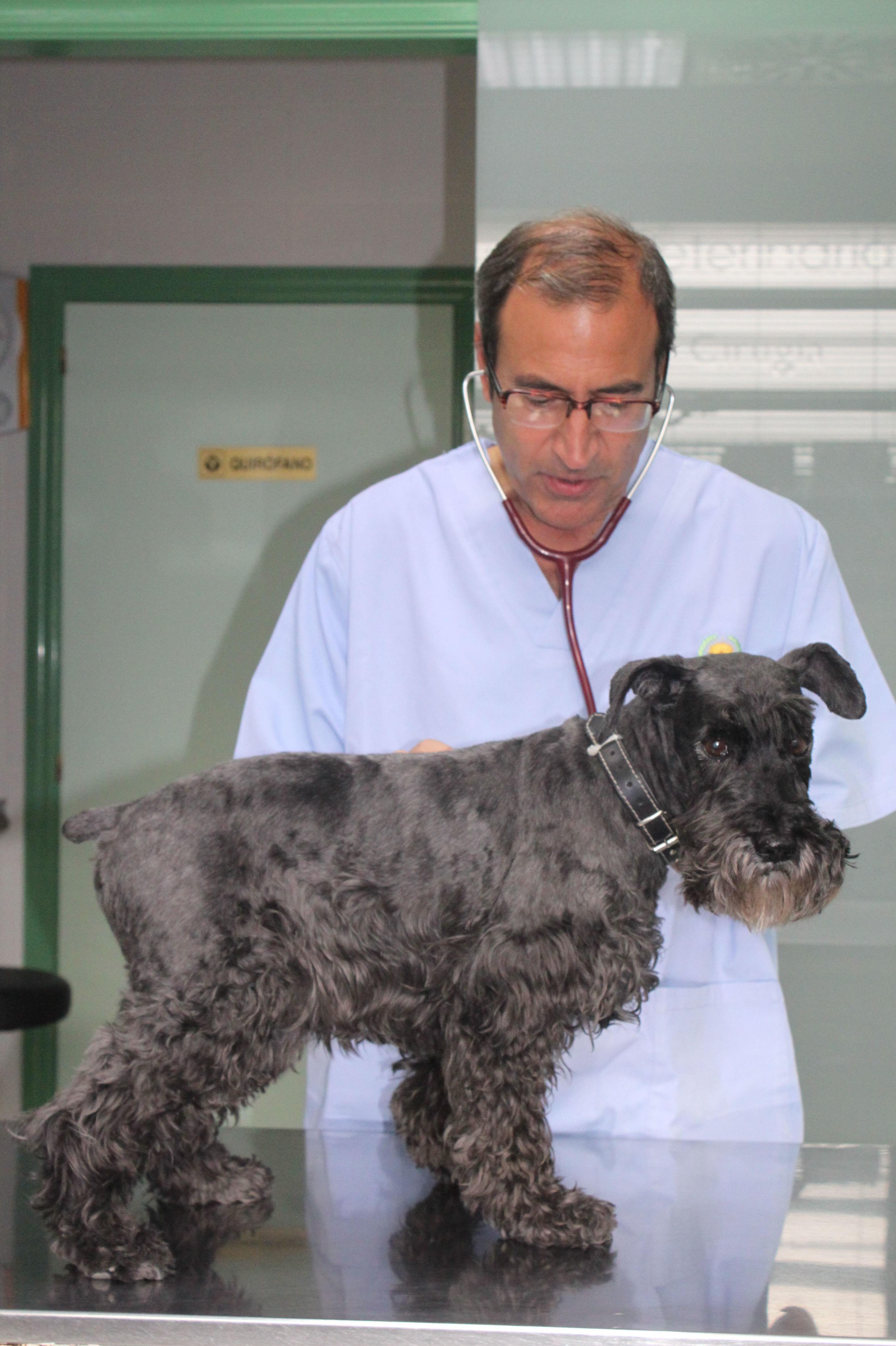 Foto 27 de Veterinarios en  | Argos Clínica Veterinaria