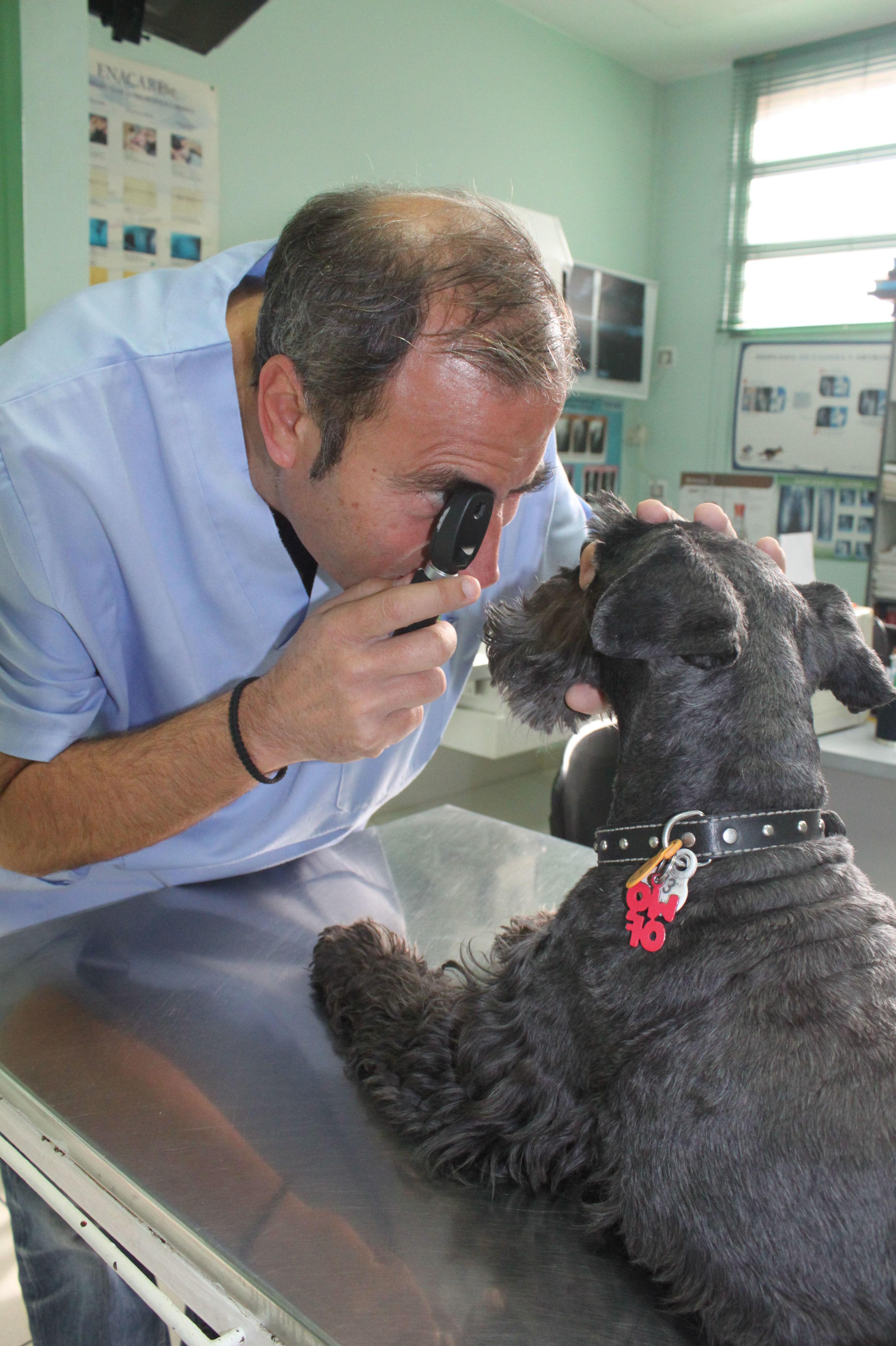 Foto 30 de Veterinarios en  | Argos Clínica Veterinaria