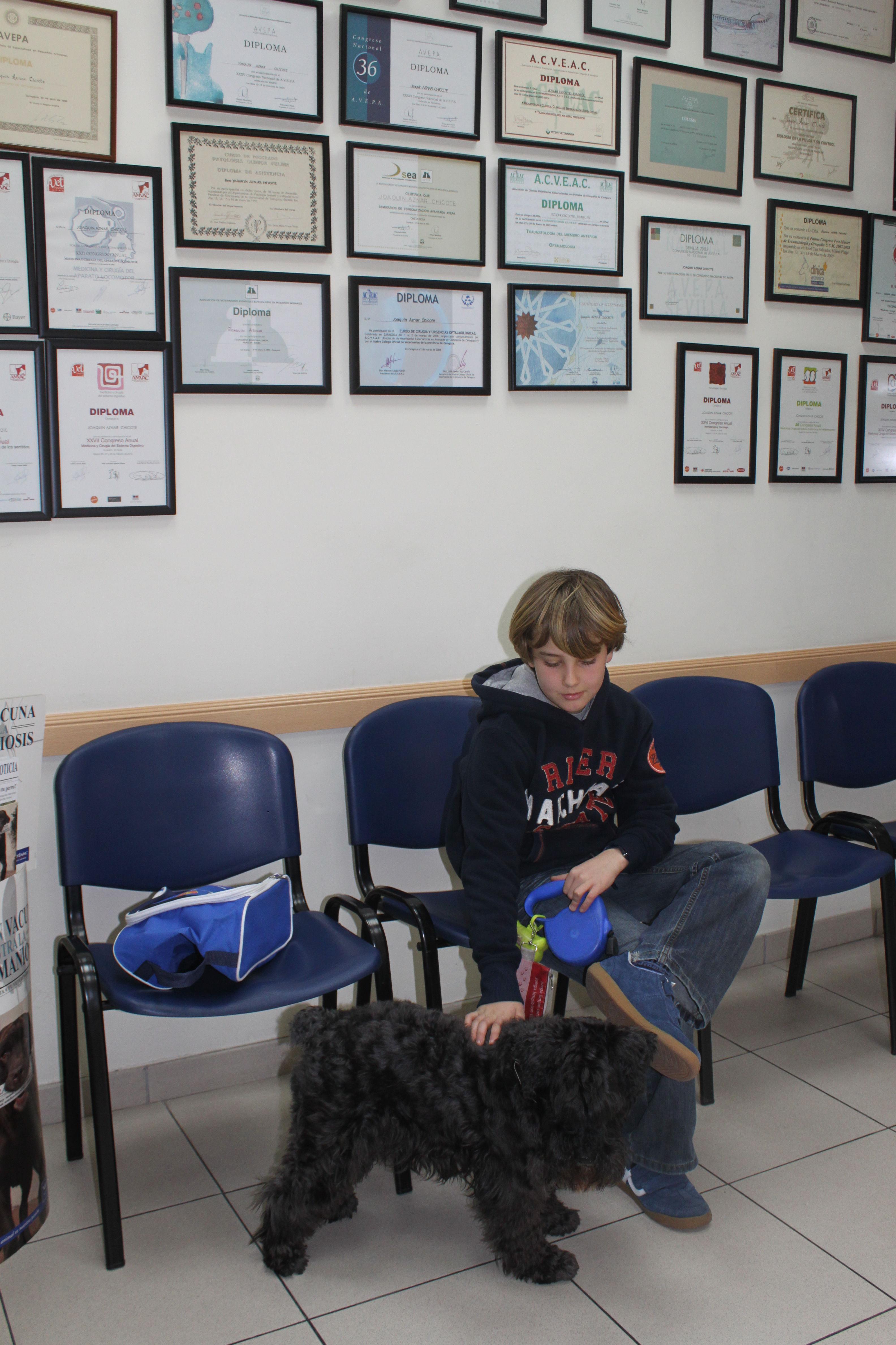 Foto 24 de Veterinarios en  | Argos Clínica Veterinaria