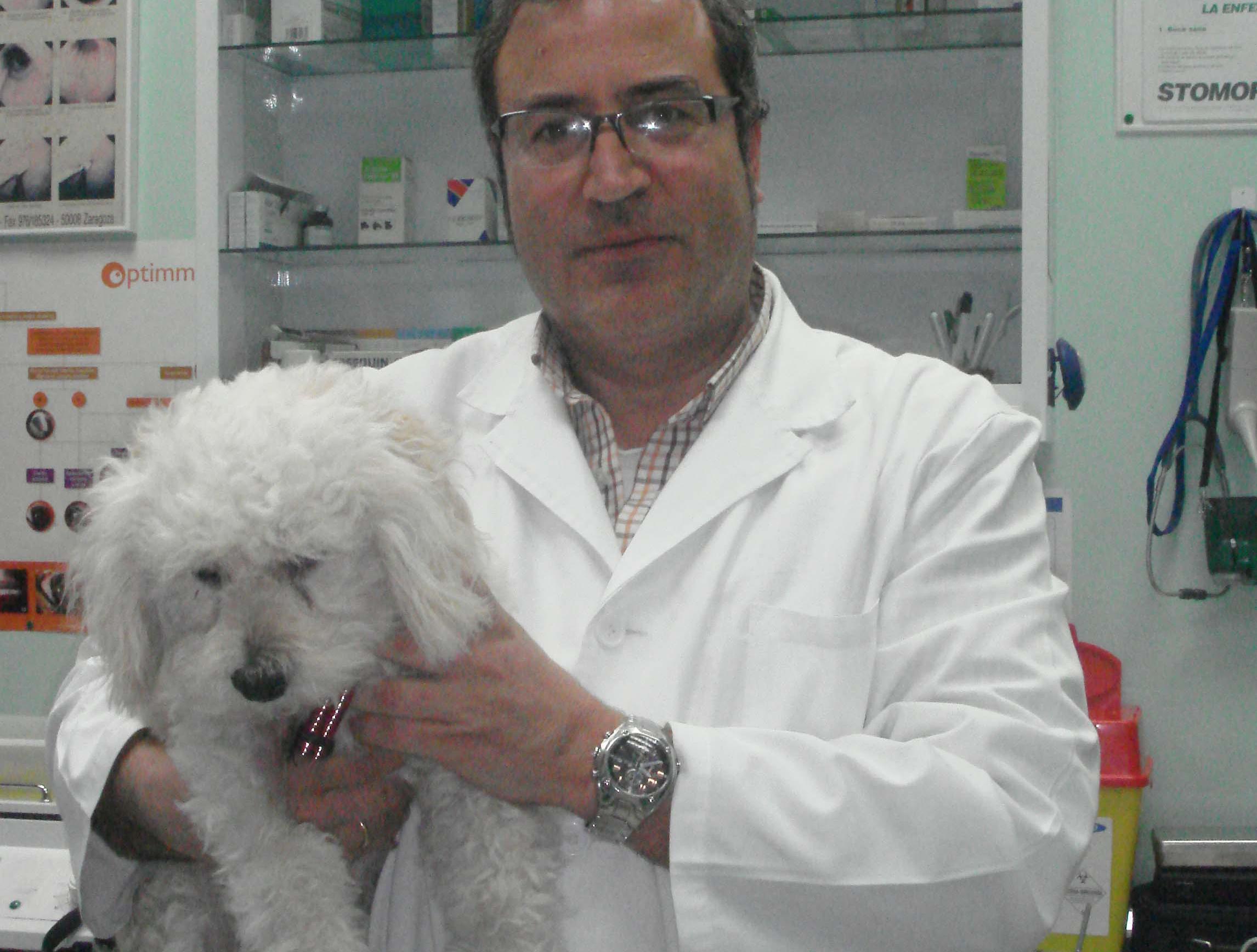 Foto 7 de Veterinarios en  | Argos Clínica Veterinaria