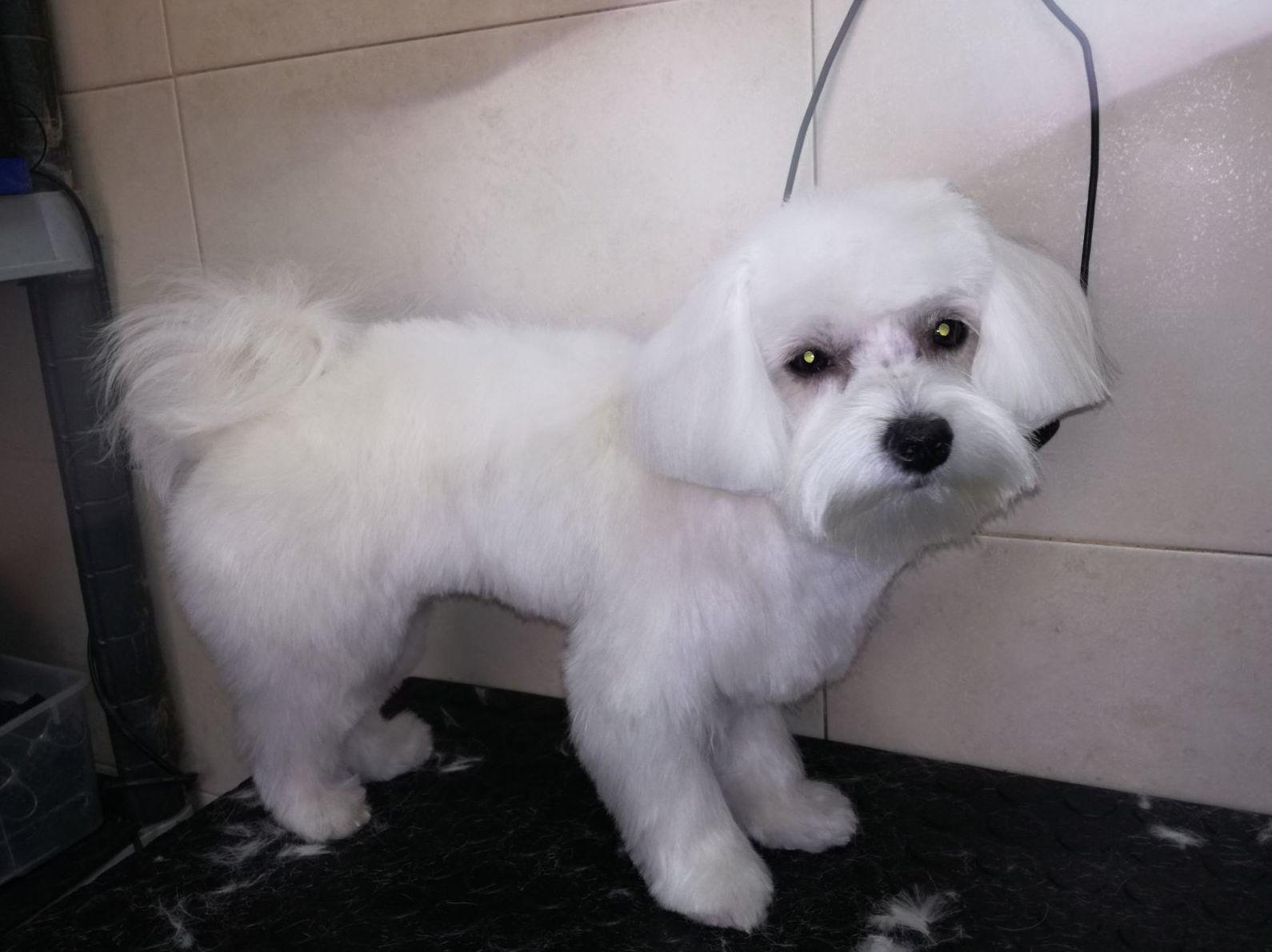 Peluquería canina San blas ( Después )