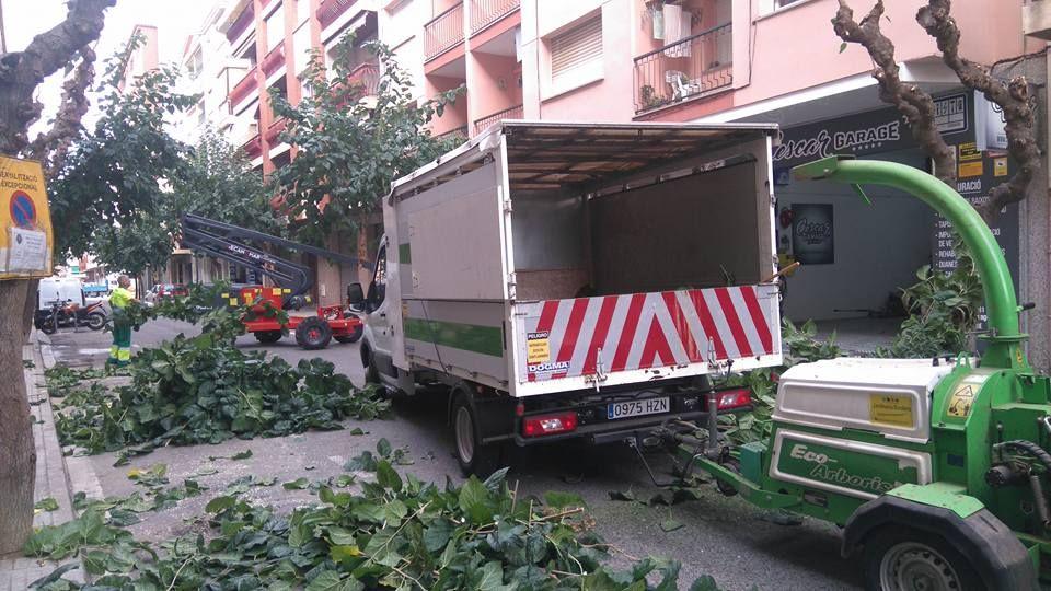 Trabajos de poda de árboles en Cambrils