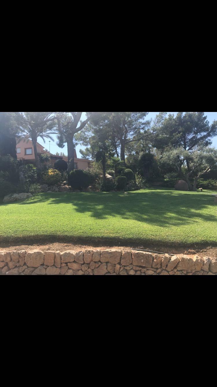Construcción y mantenimiento de jardines en Llucmajor, Baleares