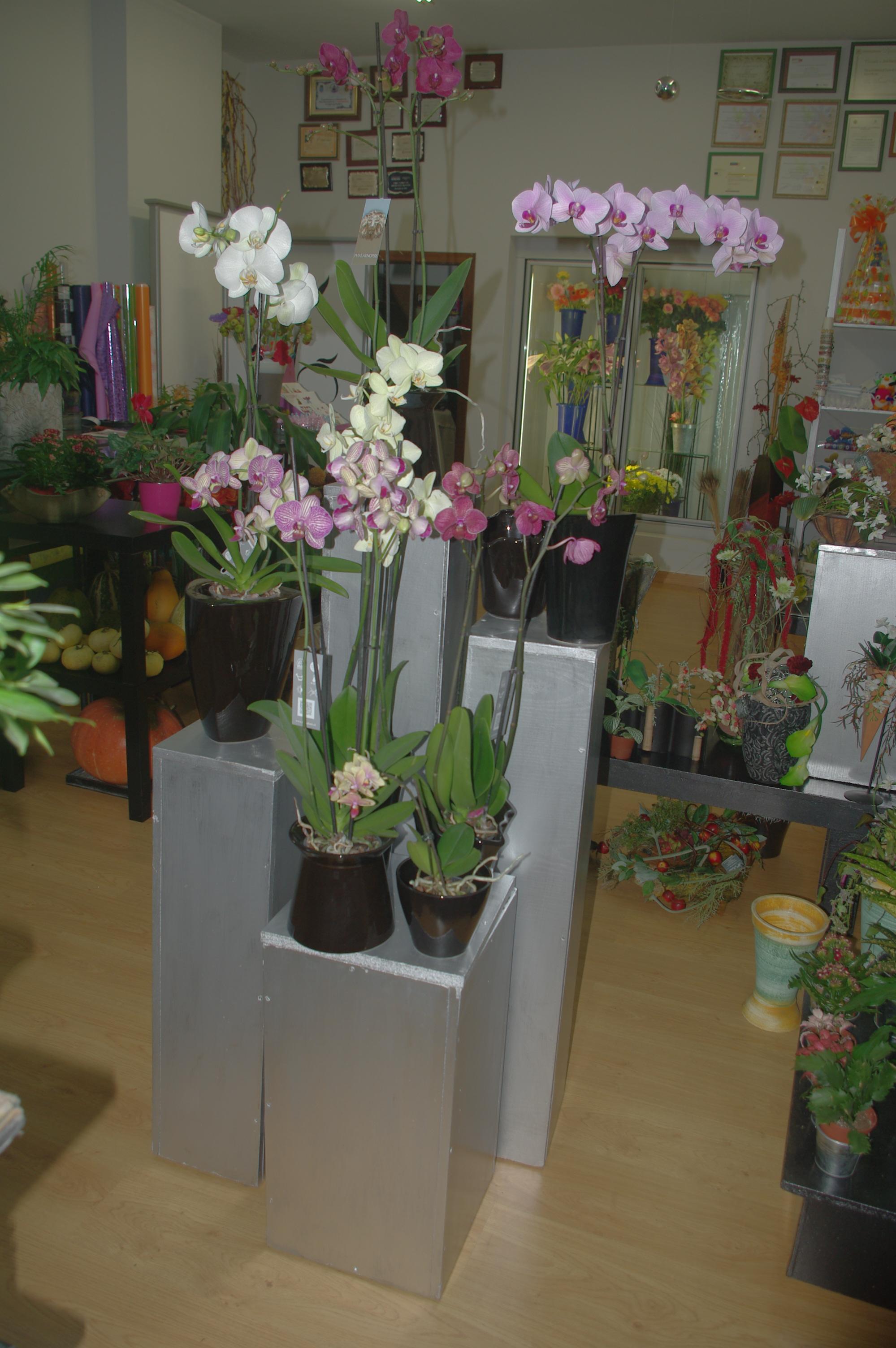 floristeria aviles