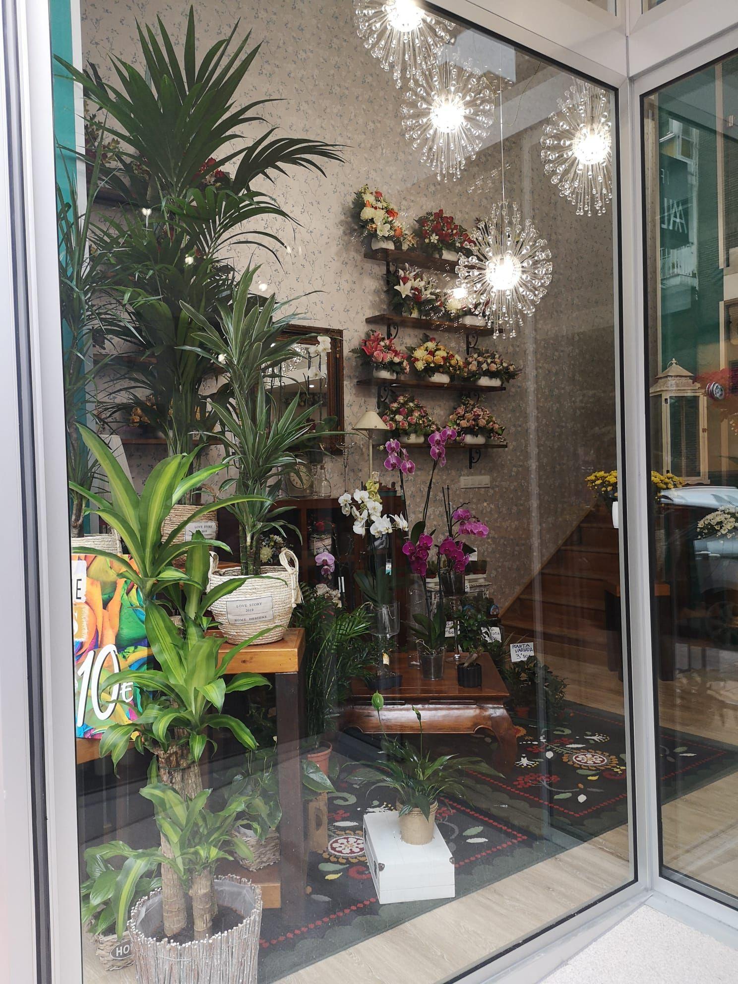 Plantas y flores en Gijón