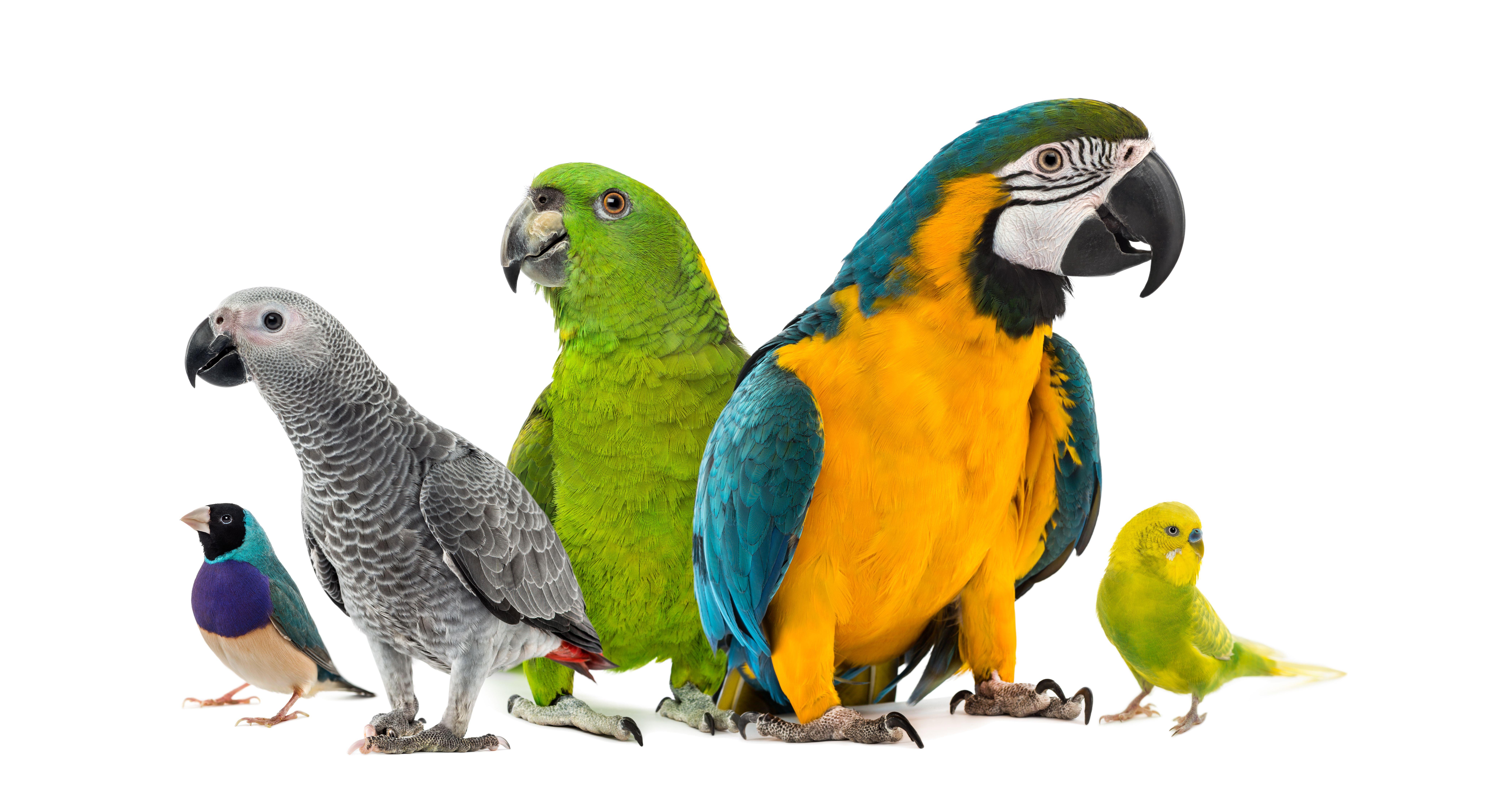 Pajaros: Servicios de Tucano Mascotas