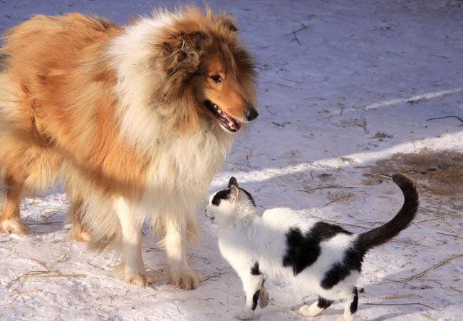 Perros y Gatos: Servicios de Tucano Mascotas