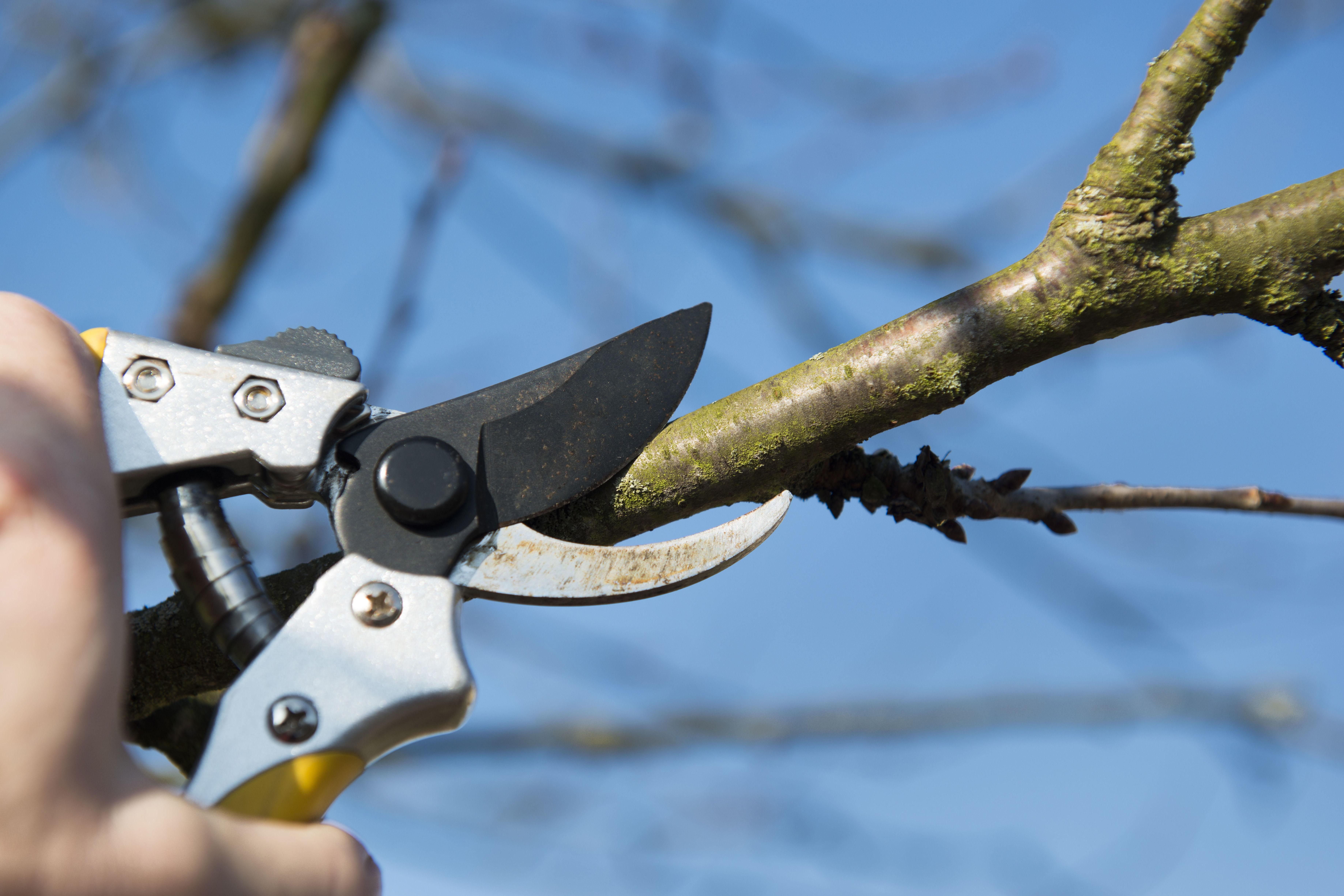 Podas de árboles : Servicios  de Jardinería Algarrada