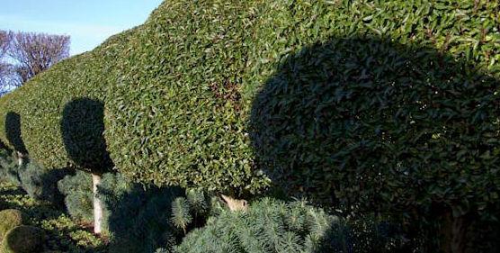 Paisajismo : Servicios  de Jardinería Algarrada