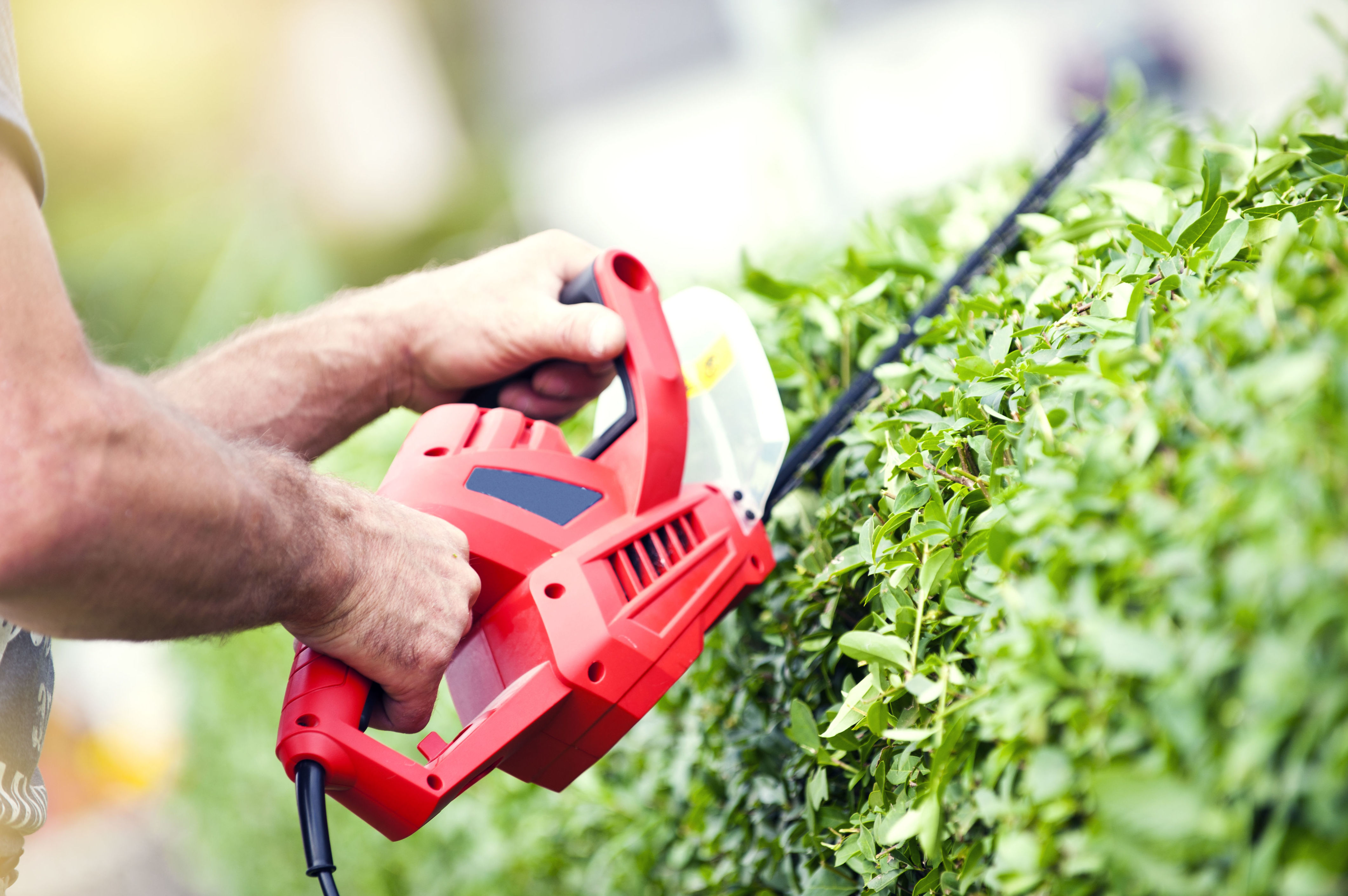 Mantenimiento de jardines : Servicios  de Jardinería Algarrada