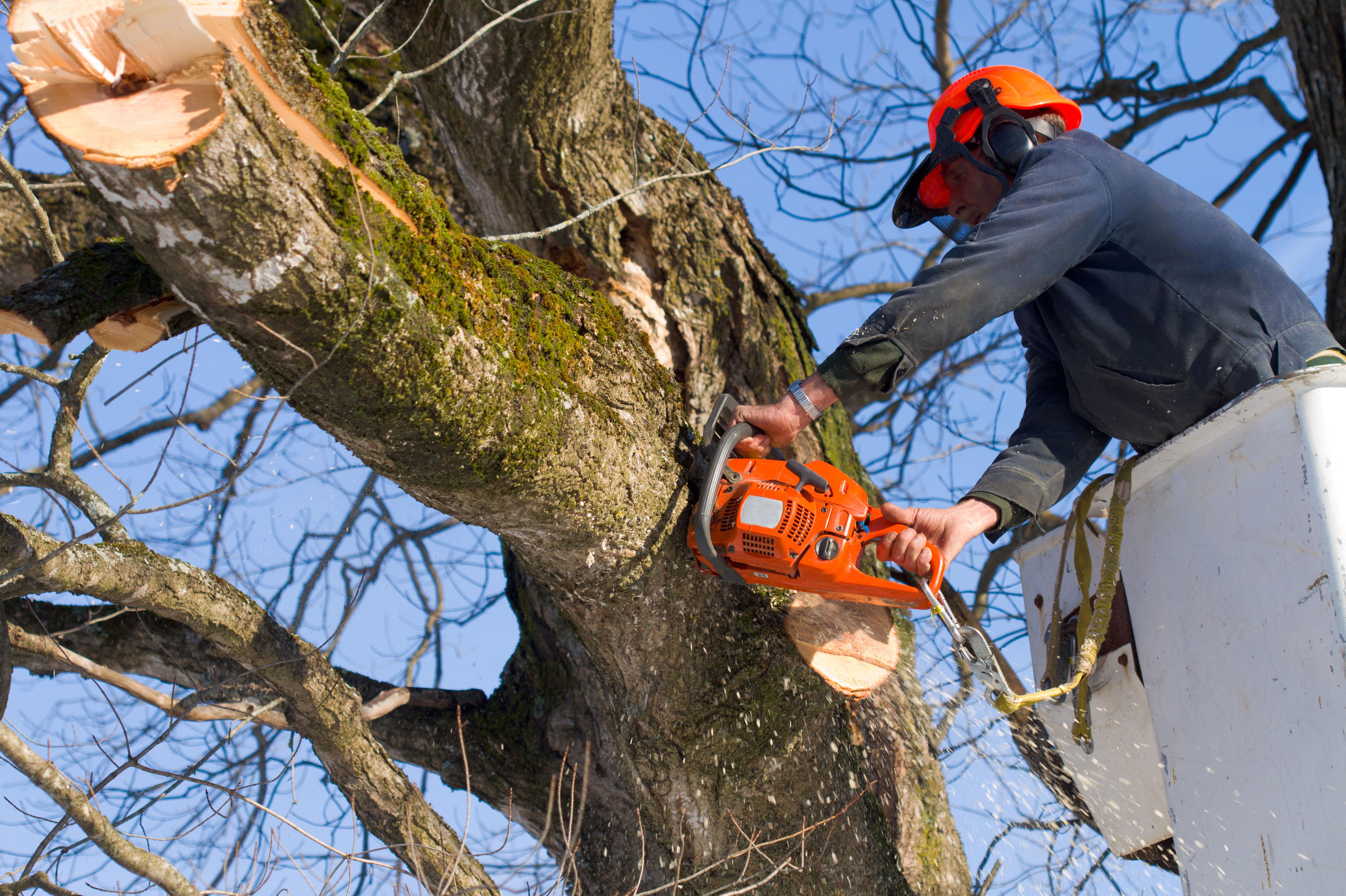 Trabajos forestales : Servicios  de Jardinería Algarrada