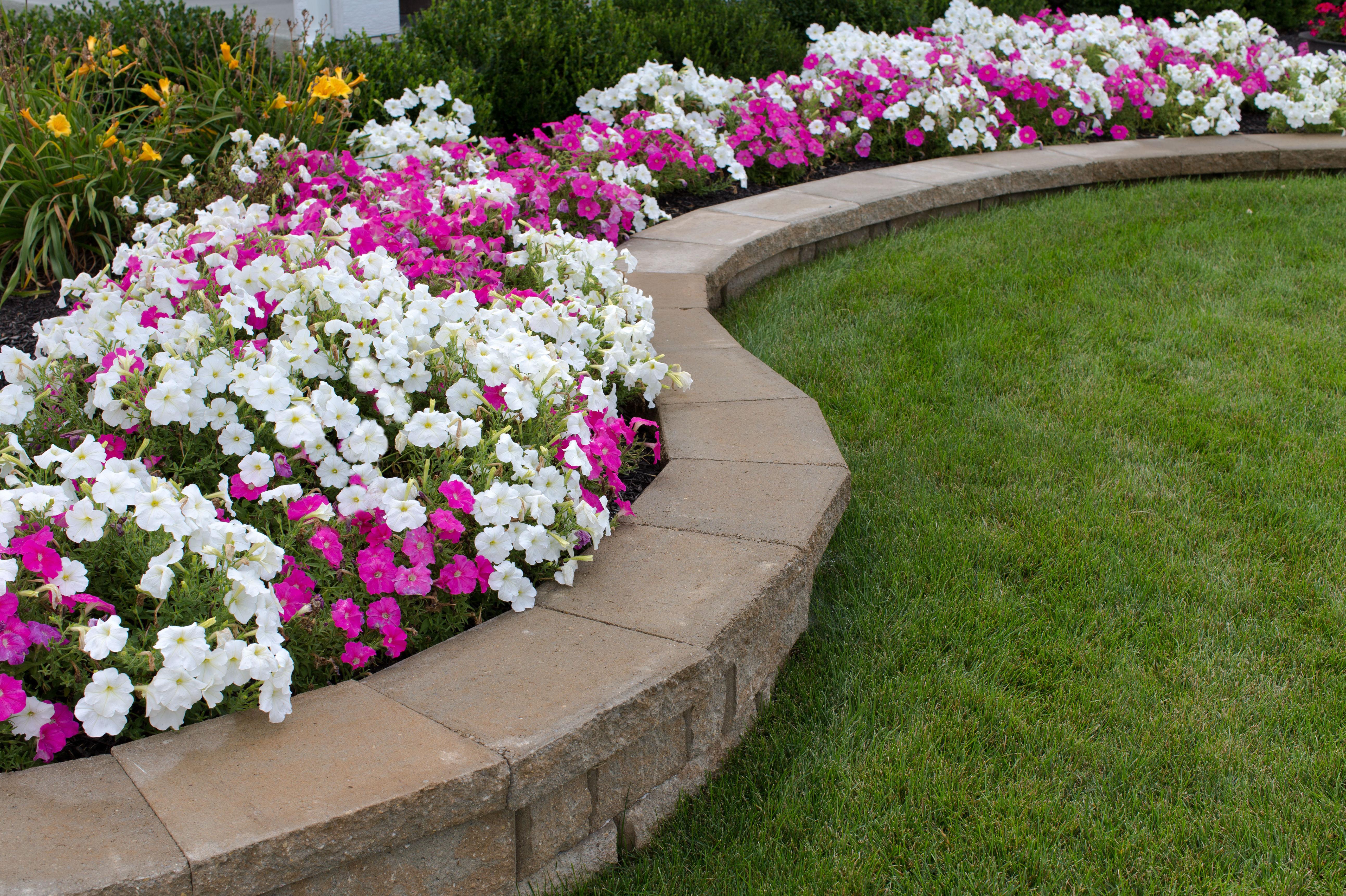Diseño y creación de jardines: Servicios  de Jardinería Algarrada