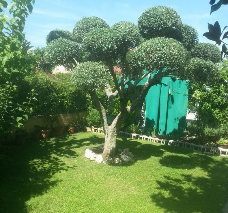 Empresa especializada en el mantenimiento de jardines