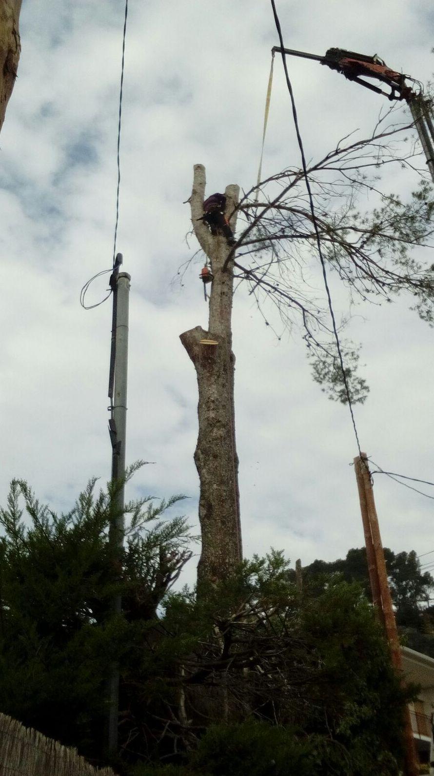 Foto 44 de Diseño y mantenimiento de jardines en Bigues i Riells | Serveis Carreras